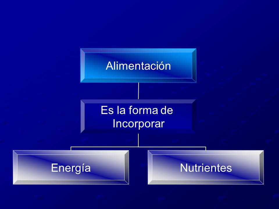 Alimentación Es la forma de Incorporar EnergíaNutrientes