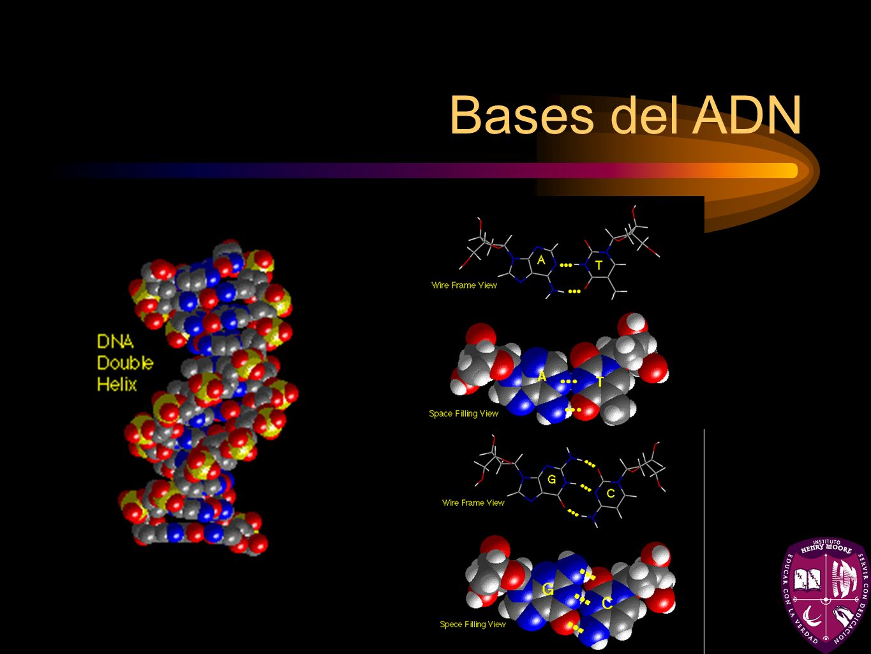 Bases del ADN