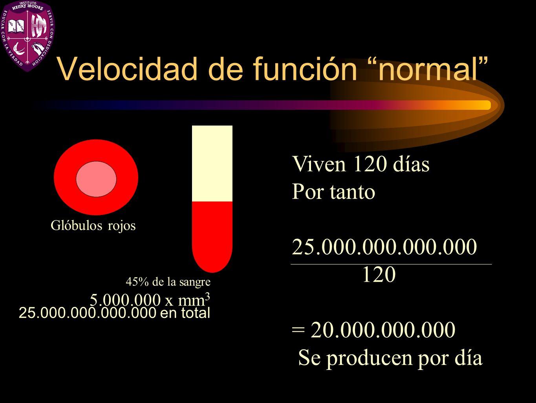 Velocidad de función normal Glóbulos rojos 45% de la sangre 5.000.000 x mm 3 25.000.000.000.000 en total Viven 120 días Por tanto 25.000.000.000.000 1