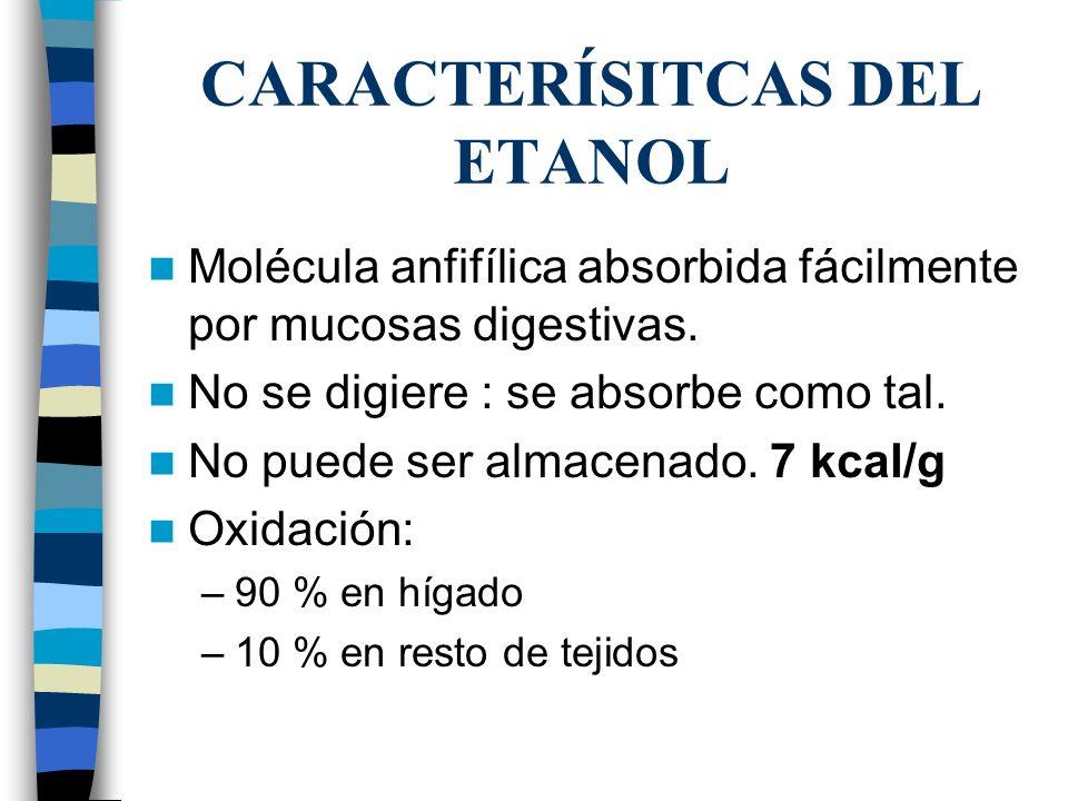 CARACTERÍSITCAS DEL ETANOL Molécula anfifílica absorbida fácilmente por mucosas digestivas. No se digiere : se absorbe como tal. No puede ser almacena