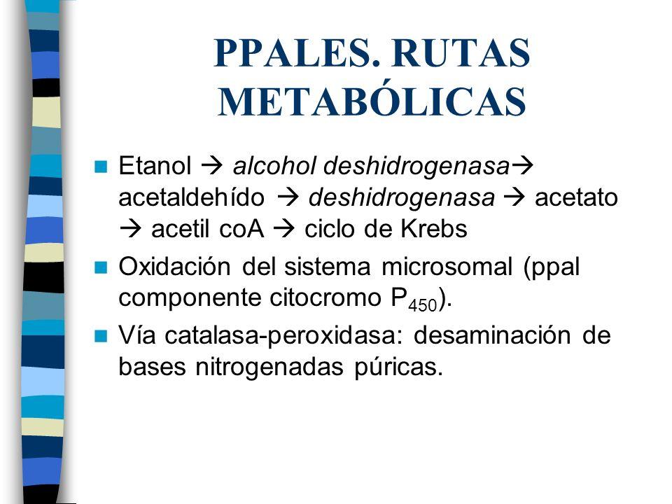 PPALES. RUTAS METABÓLICAS Etanol alcohol deshidrogenasa acetaldehído deshidrogenasa acetato acetil coA ciclo de Krebs Oxidación del sistema microsomal