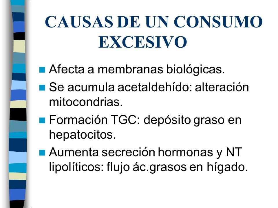 CAUSAS DE UN CONSUMO EXCESIVO Afecta a membranas biológicas. Se acumula acetaldehído: alteración mitocondrias. Formación TGC: depósito graso en hepato