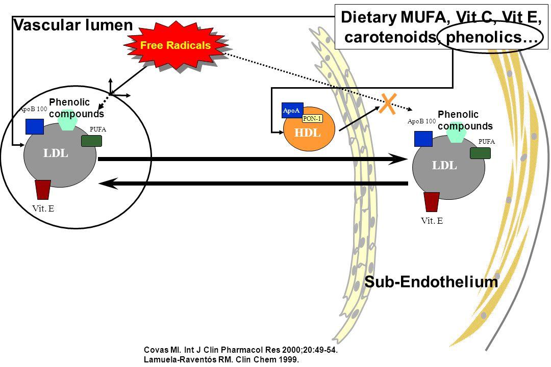 PUFA Vit. E LDL ApoB 100 Phenolic compounds Vascular lumen Covas MI.