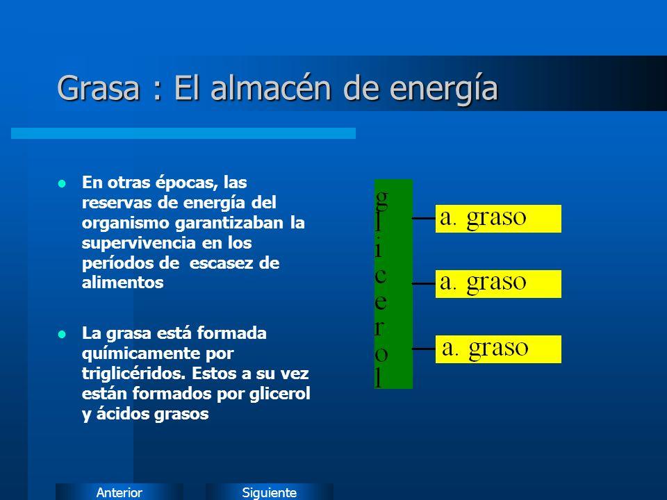 SiguienteAnterior Grasa : El almacén de energía En otras épocas, las reservas de energía del organismo garantizaban la supervivencia en los períodos de escasez de alimentos La grasa está formada químicamente por triglicéridos.