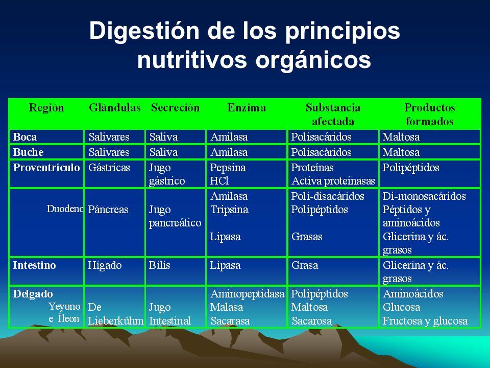 Digestión de los principios nutritivos orgánicos