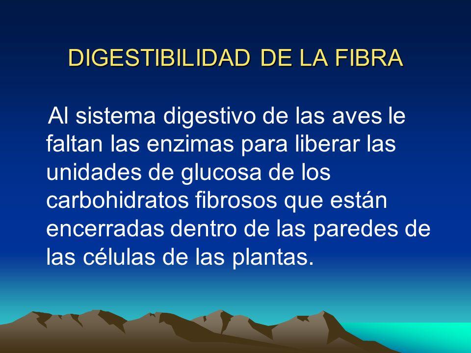 DIGESTIBILIDAD DE LA FIBRA Al sistema digestivo de las aves le faltan las enzimas para liberar las unidades de glucosa de los carbohidratos fibrosos q