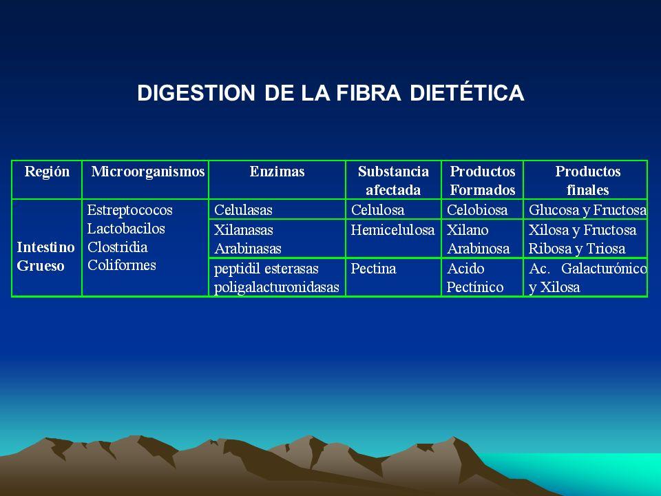DIGESTION DE LA FIBRA DIETÉTICA