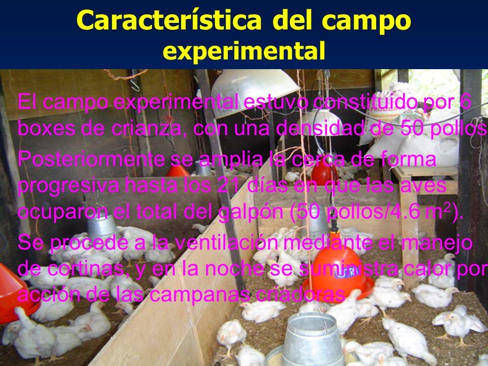 Característica del campo experimental El campo experimental estuvo constituido por 6 boxes de crianza, con una densidad de 50 pollos Posteriormente se