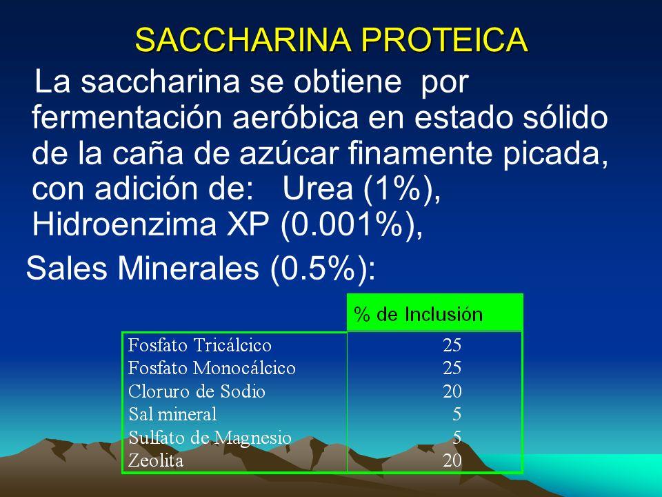 SACCHARINA PROTEICA La saccharina se obtiene por fermentación aeróbica en estado sólido de la caña de azúcar finamente picada, con adición de: Urea (1