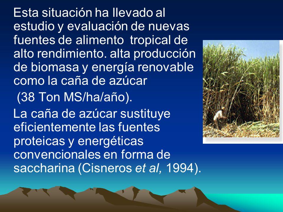 Esta situación ha llevado al estudio y evaluación de nuevas fuentes de alimento tropical de alto rendimiento. alta producción de biomasa y energía ren