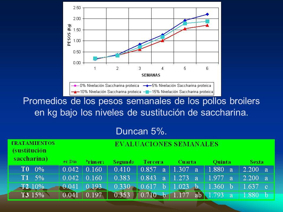 Promedios de los pesos semanales de los pollos broilers en kg bajo los niveles de sustitución de saccharina. Duncan 5%.