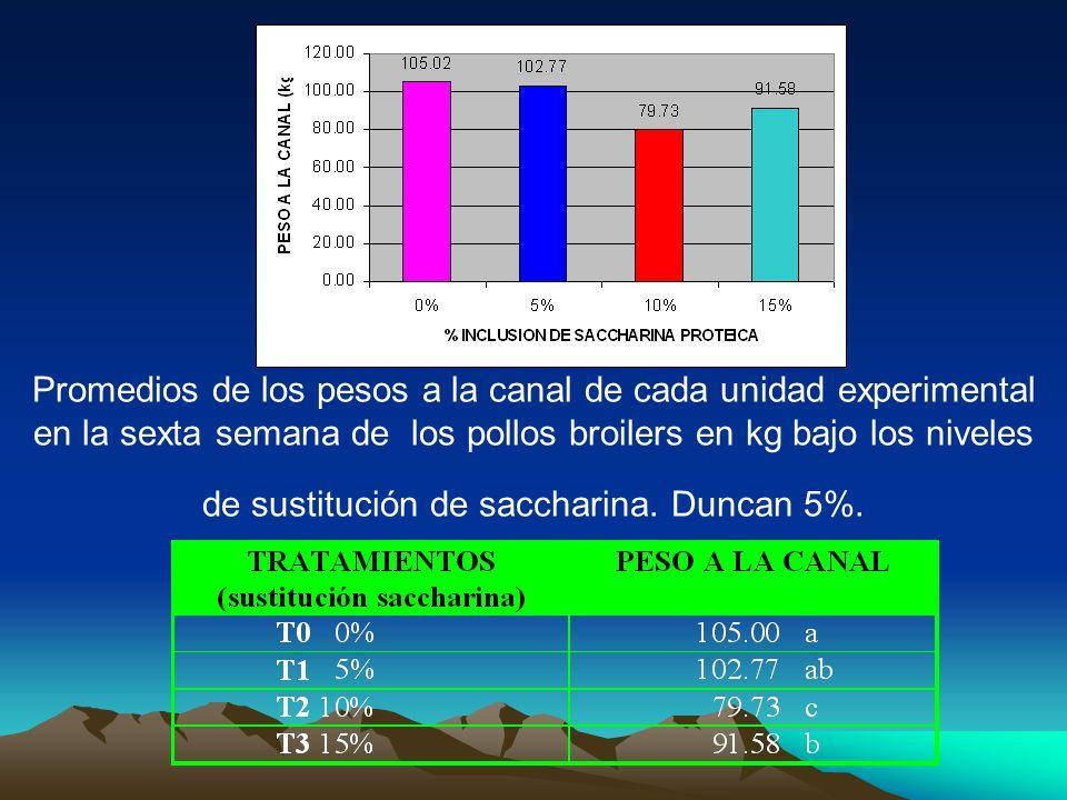 Promedios de los pesos a la canal de cada unidad experimental en la sexta semana de los pollos broilers en kg bajo los niveles de sustitución de sacch