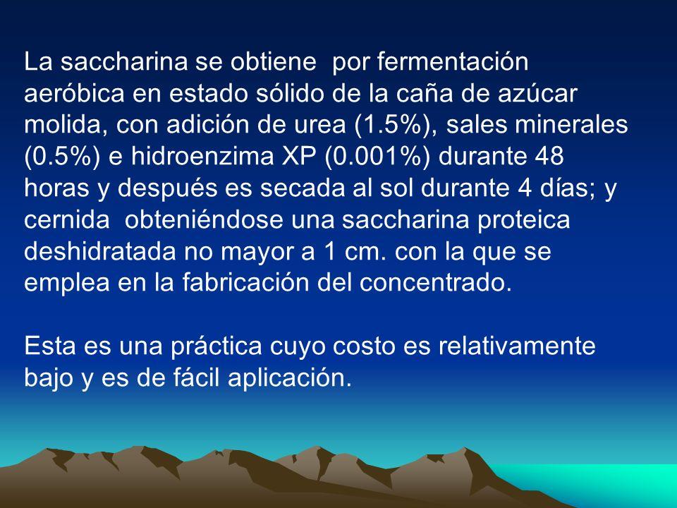 La saccharina se obtiene por fermentación aeróbica en estado sólido de la caña de azúcar molida, con adición de urea (1.5%), sales minerales (0.5%) e