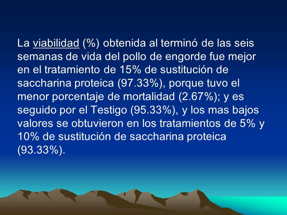 La viabilidad (%) obtenida al terminó de las seis semanas de vida del pollo de engorde fue mejor en el tratamiento de 15% de sustitución de saccharina