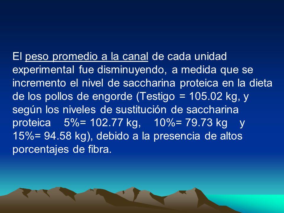 El peso promedio a la canal de cada unidad experimental fue disminuyendo, a medida que se incremento el nivel de saccharina proteica en la dieta de lo