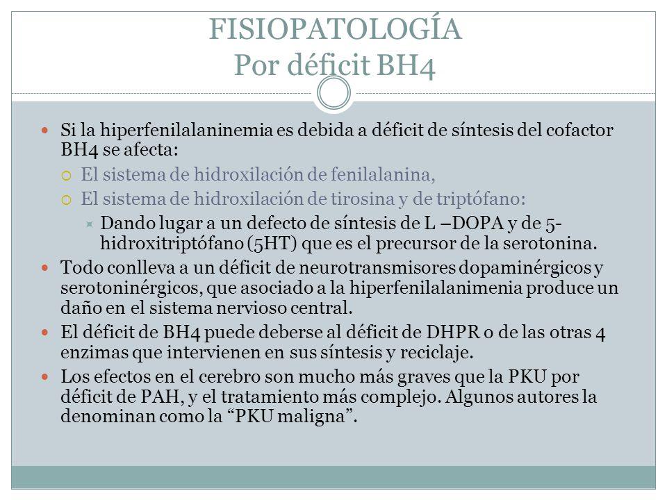 FISIOPATOLOGÍA Por déficit BH4 Si la hiperfenilalaninemia es debida a déficit de síntesis del cofactor BH4 se afecta: El sistema de hidroxilación de f