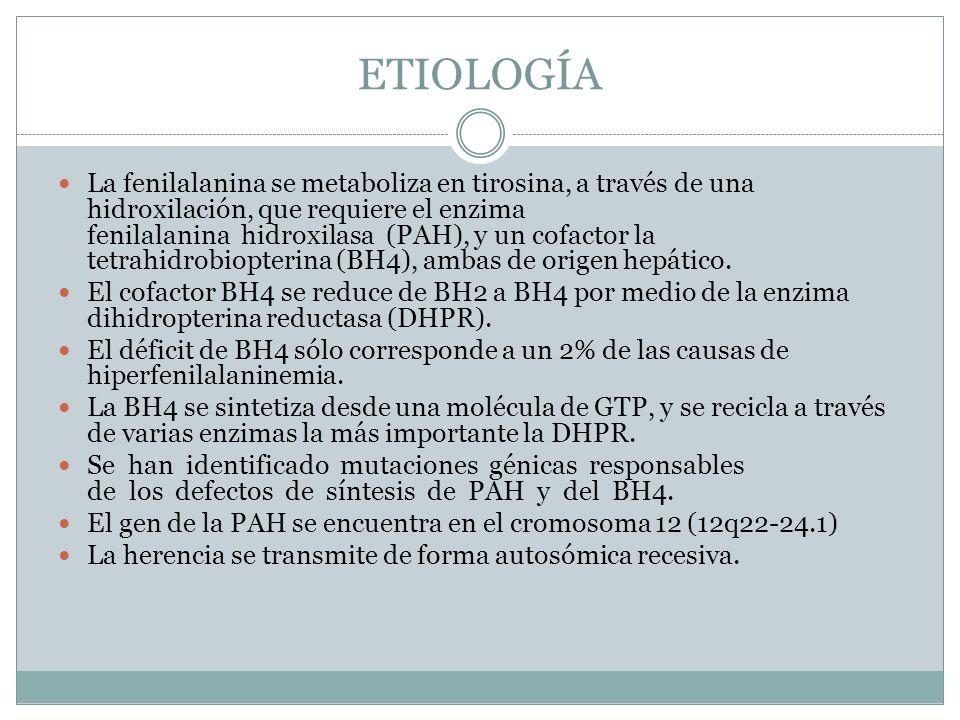 ETIOLOGÍA La fenilalanina se metaboliza en tirosina, a través de una hidroxilación, que requiere el enzima fenilalanina hidroxilasa (PAH), y un cofact