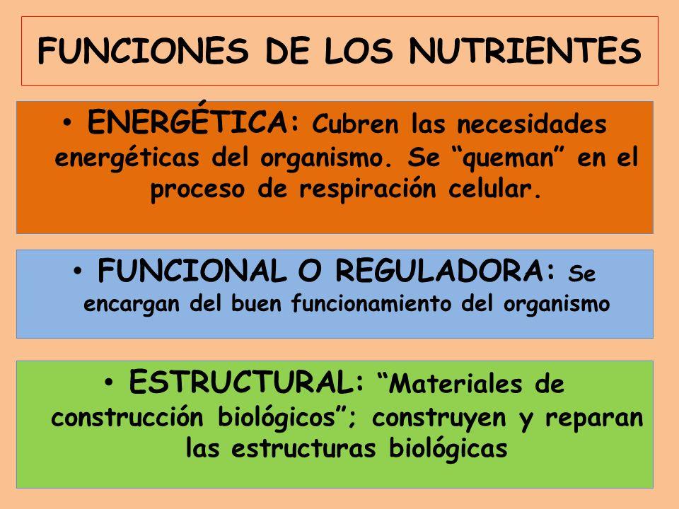 FUNCIONES DE LOS NUTRIENTES ENERGÉTICA: Cubren las necesidades energéticas del organismo.