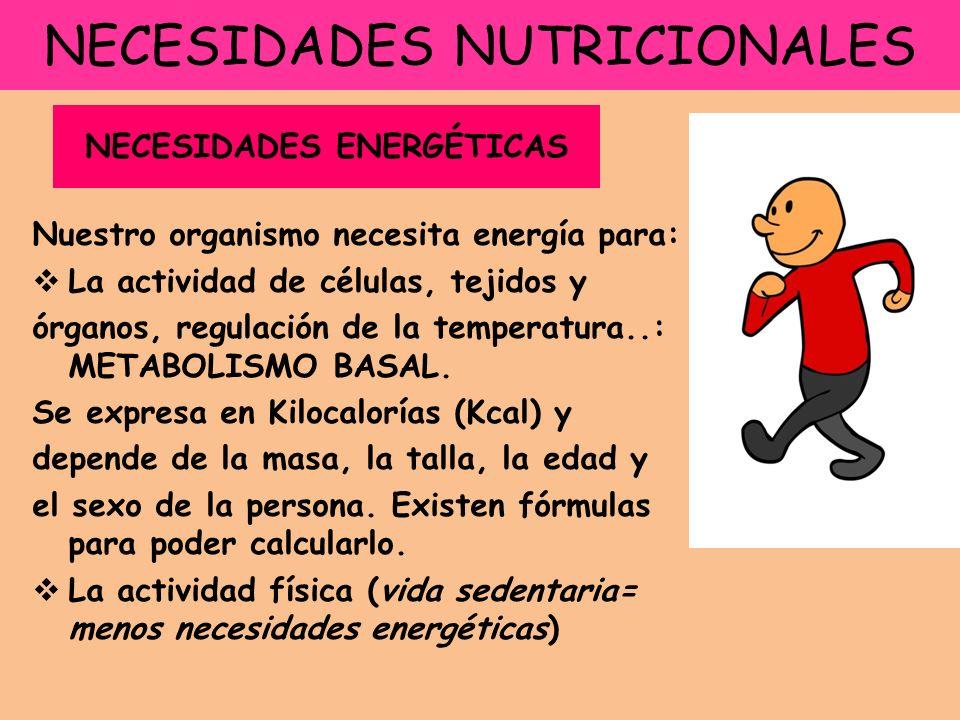 NECESIDADES NUTRICIONALES Nuestro organismo necesita energía para: La actividad de células, tejidos y órganos, regulación de la temperatura..: METABOLISMO BASAL.