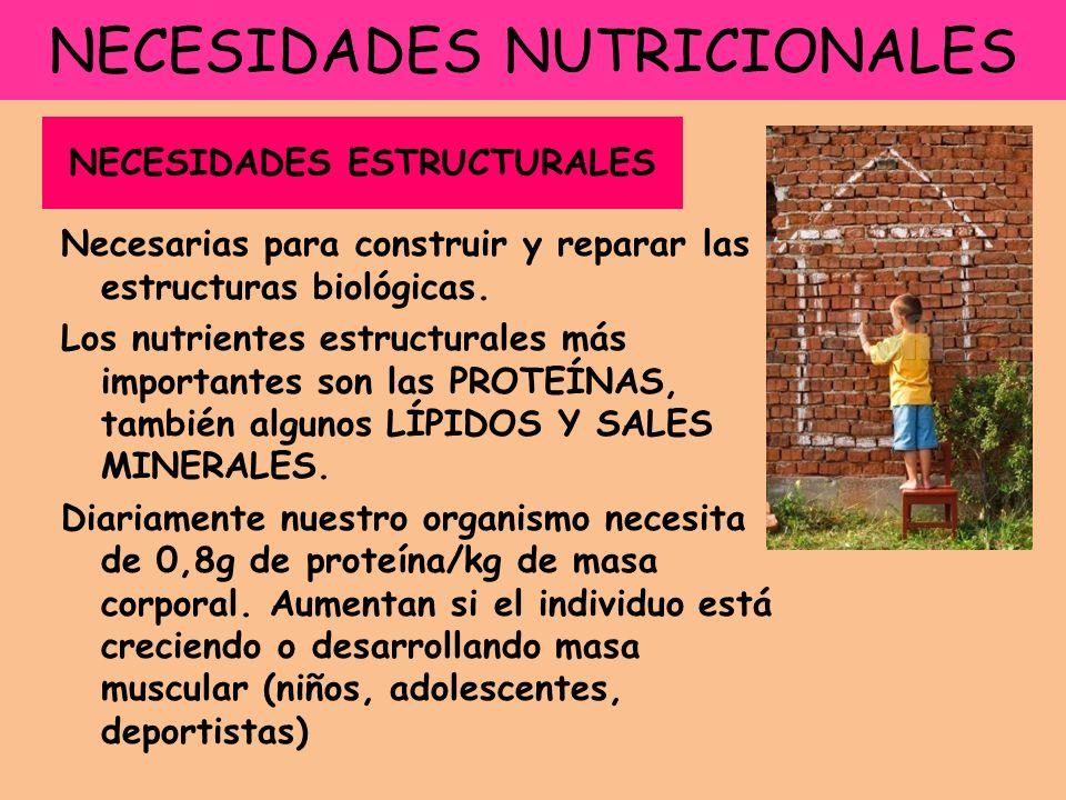 NECESIDADES NUTRICIONALES Necesarias para construir y reparar las estructuras biológicas.