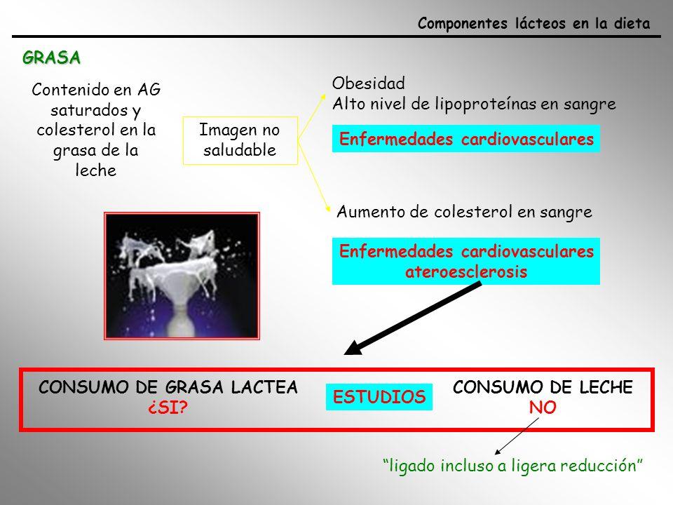 La grasa láctea se encuentra en estado liquido ----fácil digestibilidad Contribuye al sabor, aroma (respuestas sensoriales en boca y nariz) y palatabilidad de todos los productos lácteos sirven de transporte de las vitaminas liposolubles -caroteno: (precursor de Vit A: problemas en los ojos) Vitamina D: (huesos; importante en mujer embarazada y lactantes, niños) aporte energético Triglicéridos: gran aporte de energía (50%) Ácidos grasos de cadena corta:no aportan mucha energía pero son muy asimilables (directos al hígado) Si se sustituye el aporte energético de la grasa láctea por carbohidratos las HDL (beneficiosas) Componentes lácteos en la dieta GRASA