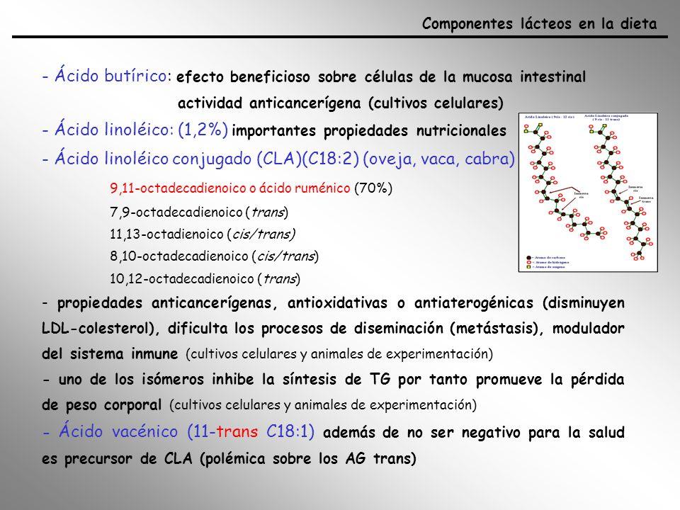 - Ácido butírico: efecto beneficioso sobre células de la mucosa intestinal actividad anticancerígena (cultivos celulares) - Ácido linoléico: (1,2%) im