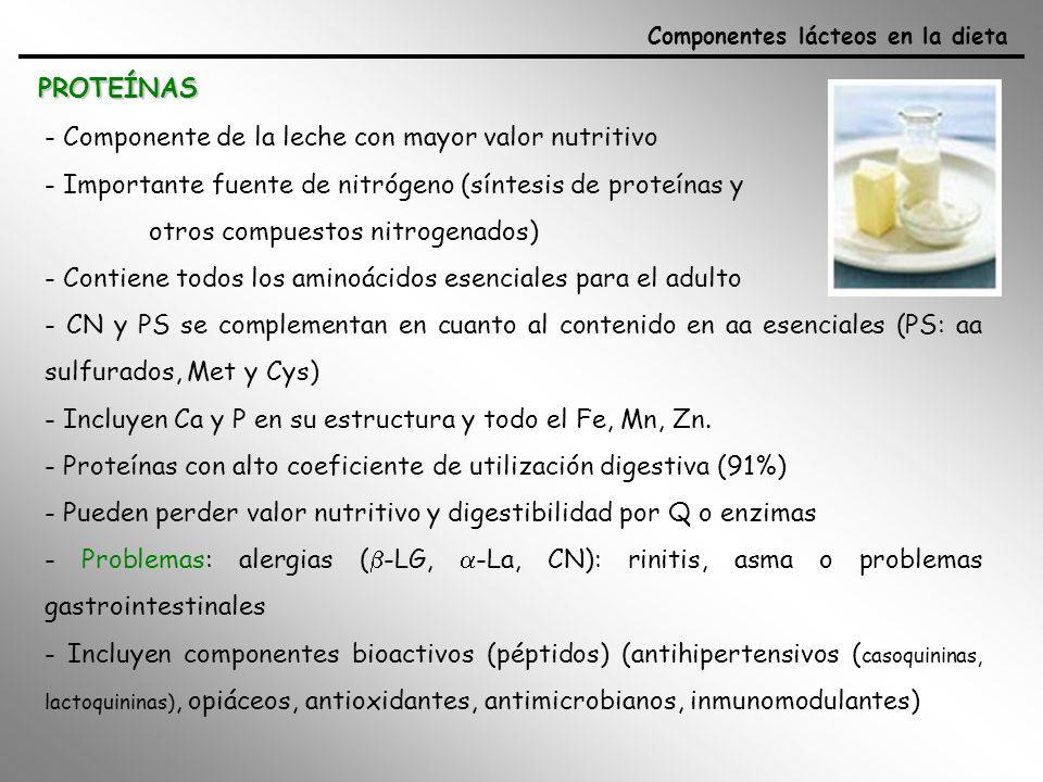 MINERALES: Ca y P Componentes lácteos en la dieta - papel clave para la formación, crecimiento, consolidación y mantenimiento del esqueleto - 99% del Ca y el 85% del P se almacena en los huesos (2:1) y dientes y el 1% esta en la sangre o participando en funciones del organismo (flexión muscular, coagulación sanguínea, transmisión nerviosa) - leche es fuente importante de Ca (1.2 g/l - enriquecidas 1.5 g/l) - gran biodisponibilidad (absorción real 25-32%, dependiendo del producto) + lactosa, péptidos, + Vit D (regula metabolismo del fosfato cálcico intestinal favoreciendo su absorción y osificación, mantiene niveles de Ca y P en sangre) + 15 raciones de espinacas (fitatos y oxalatos) = 1 vaso de leche ó 1 yogur - consumo de Ca 0.8-2 g/día - lácteos contribuyen al 65-75% de la CDR