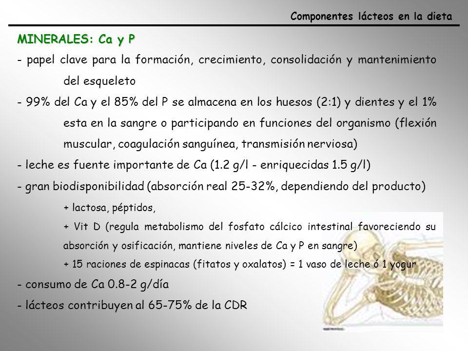 MINERALES: Ca y P Componentes lácteos en la dieta - papel clave para la formación, crecimiento, consolidación y mantenimiento del esqueleto - 99% del