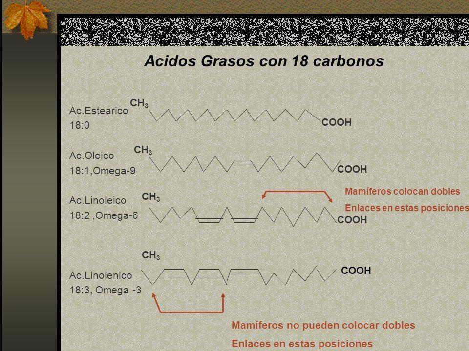 Acidos Grasos con 18 carbonos Ac.Estearico 18:0 Ac.Oleico 18:1,Omega-9 Ac.Linoleico 18:2,Omega-6 Ac.Linolenico 18:3, Omega -3 COOH CH 3 COOH CH 3 COOH
