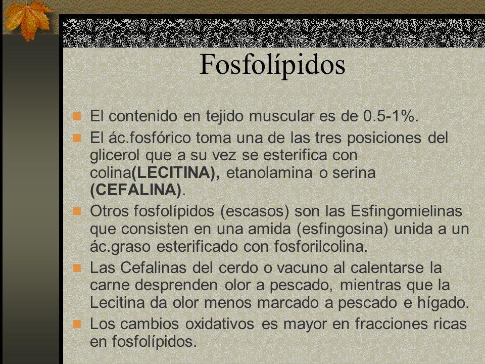 Fosfolípidos El contenido en tejido muscular es de 0.5-1%. El ác.fosfórico toma una de las tres posiciones del glicerol que a su vez se esterifica con