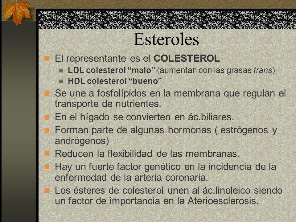 Esteroles El representante es el COLESTEROL LDL colesterol malo (aumentan con las grasas trans) HDL colesterol bueno Se une a fosfolípidos en la membr