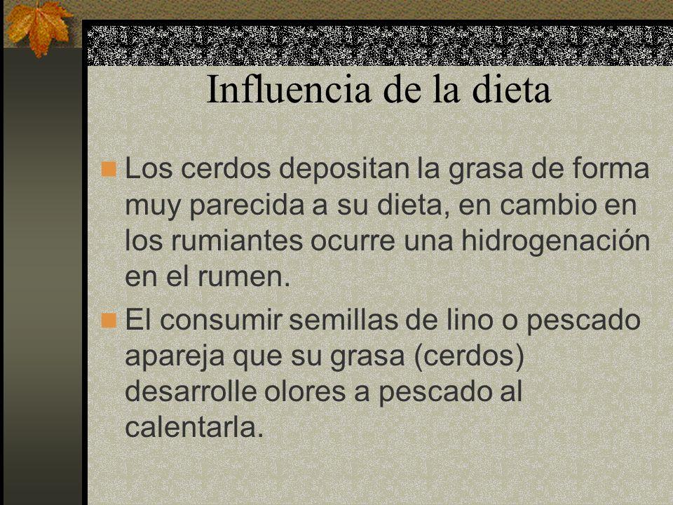Influencia de la dieta Los cerdos depositan la grasa de forma muy parecida a su dieta, en cambio en los rumiantes ocurre una hidrogenación en el rumen