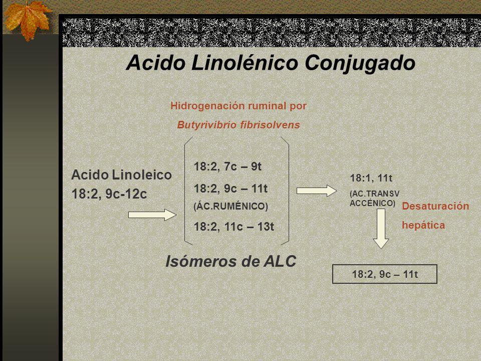 Acido Linolénico Conjugado Acido Linoleico 18:2, 9c-12c 18:2, 7c – 9t 18:2, 9c – 11t (ÁC.RUMÉNICO) 18:2, 11c – 13t Isómeros de ALC Hidrogenación rumin