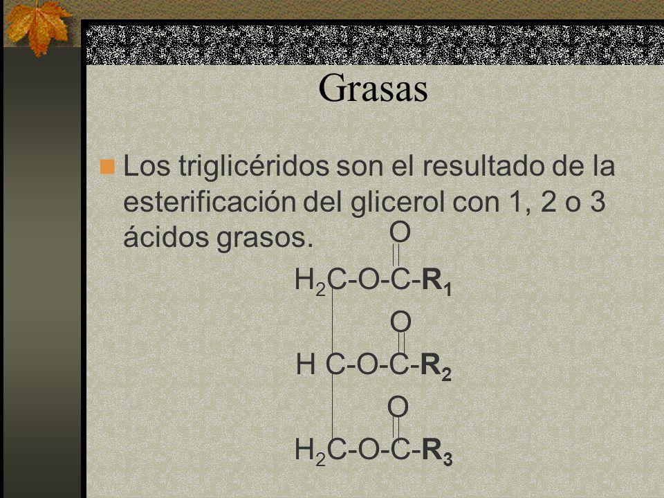 Grasas Los triglicéridos son el resultado de la esterificación del glicerol con 1, 2 o 3 ácidos grasos. H 2 C-O-C-R 1 O H C-O-C-R 2 O H 2 C-O-C-R 3 O