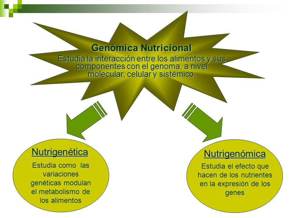 Genómica Nutricional Estudia la interacción entre los alimentos y sus componentes con el genoma, a nivel molecular, celular y sistémico. Nutrigenética