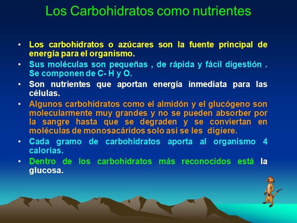 Los Carbohidratos como nutrientes Los carbohidratos o azúcares son la fuente principal de energía para el organismo. Sus moléculas son pequeñas, de rá