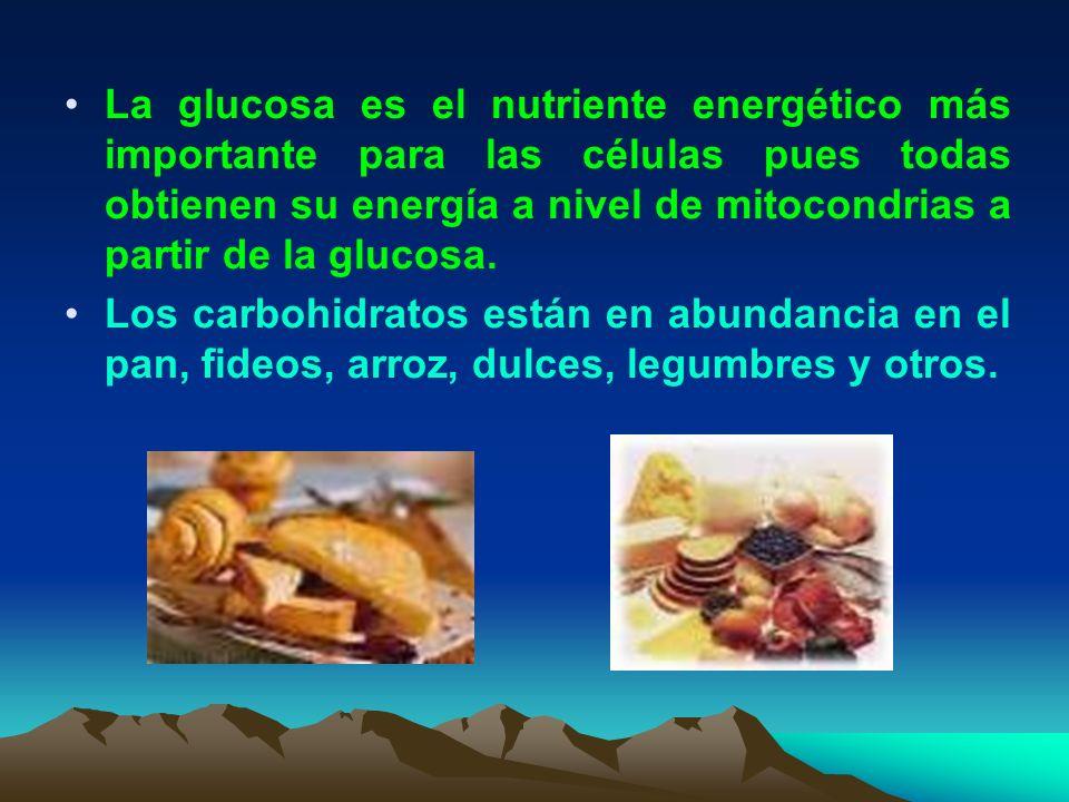 La glucosa es el nutriente energético más importante para las células pues todas obtienen su energía a nivel de mitocondrias a partir de la glucosa. L