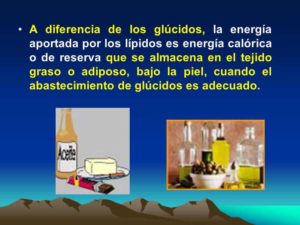 A diferencia de los glúcidos, la energía aportada por los lípidos es energía calórica o de reserva que se almacena en el tejido graso o adiposo, bajo