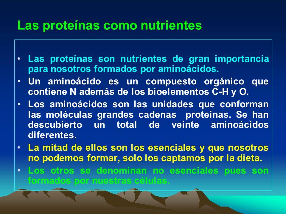 Las proteínas como nutrientes Las proteínas son nutrientes de gran importancia para nosotros formados por aminoácidos. Un aminoácido es un compuesto o