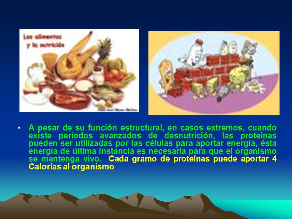 A pesar de su función estructural, en casos extremos, cuando existe periodos avanzados de desnutrición, las proteínas pueden ser utilizadas por las cé