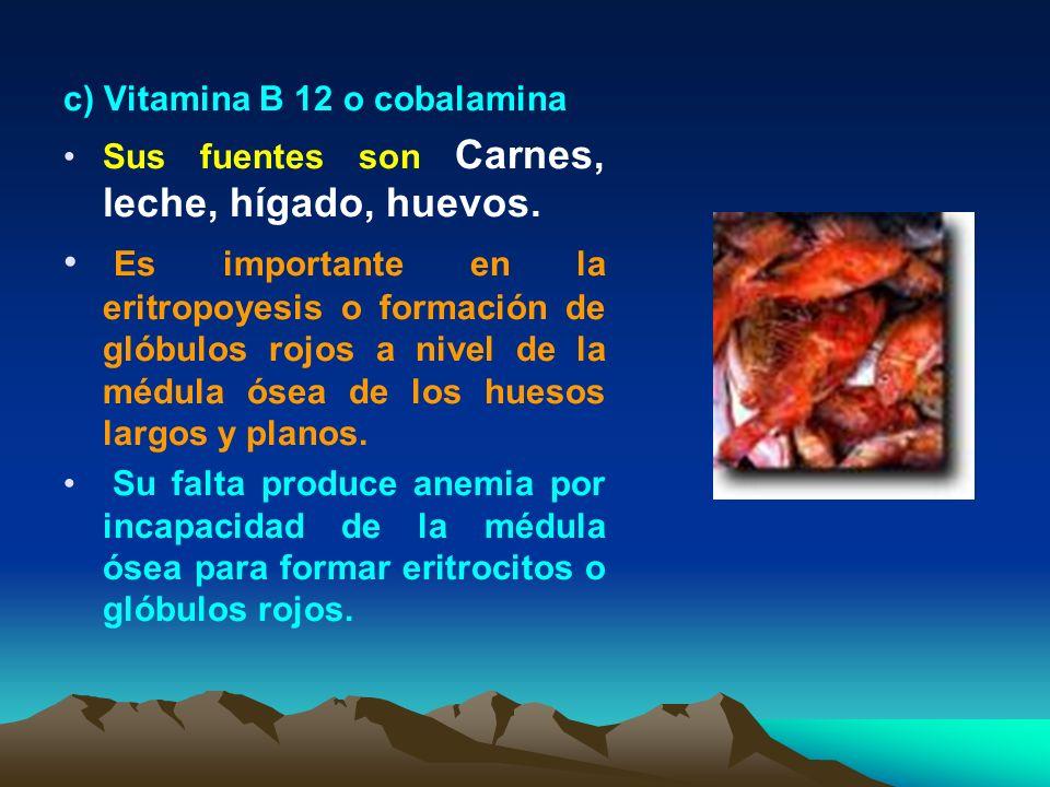 c) Vitamina B 12 o cobalamina Sus fuentes son Carnes, leche, hígado, huevos. Es importante en la eritropoyesis o formación de glóbulos rojos a nivel d