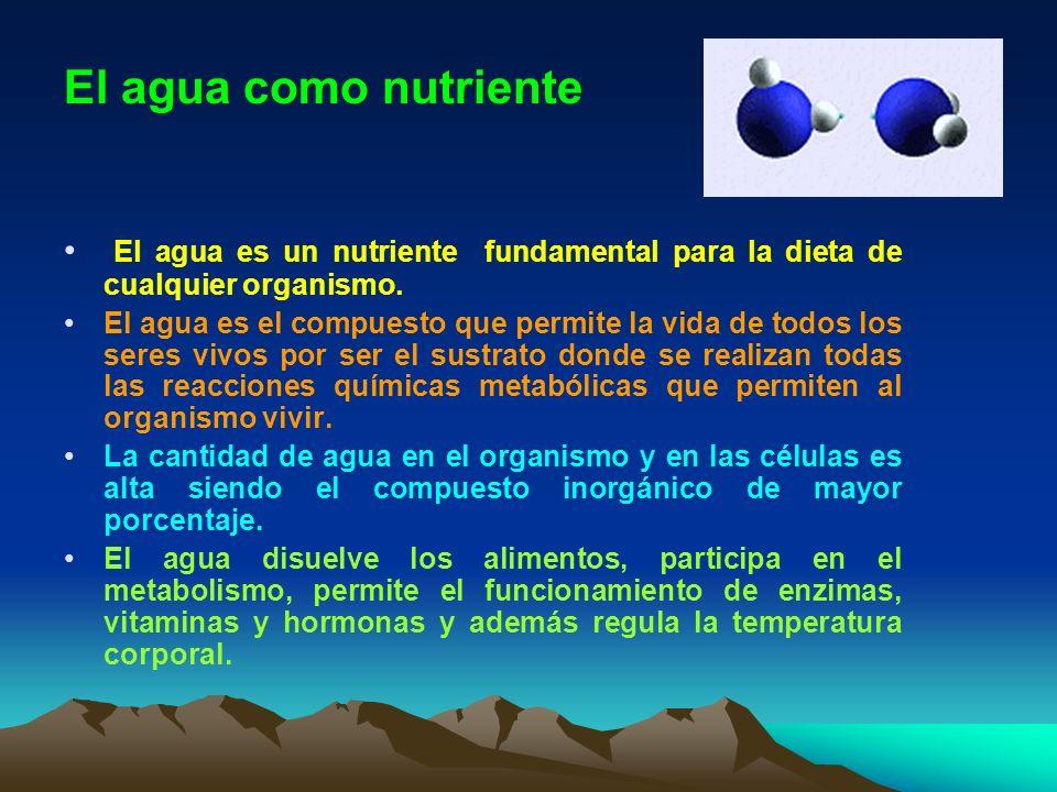 El agua como nutriente El agua es un nutriente fundamental para la dieta de cualquier organismo. El agua es el compuesto que permite la vida de todos