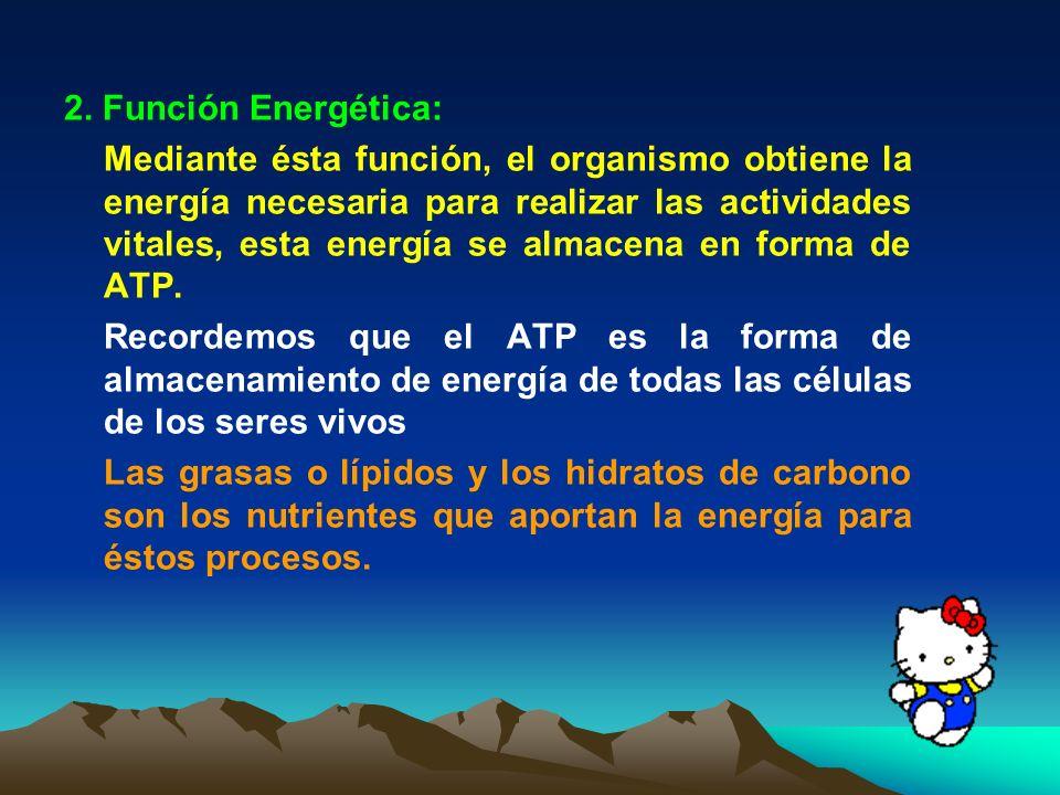 2. Función Energética: Mediante ésta función, el organismo obtiene la energía necesaria para realizar las actividades vitales, esta energía se almacen
