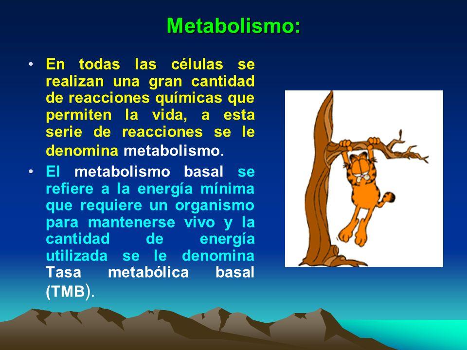 Metabolismo: En todas las células se realizan una gran cantidad de reacciones químicas que permiten la vida, a esta serie de reacciones se le denomina