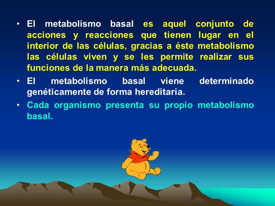 El metabolismo basal es aquel conjunto de acciones y reacciones que tienen lugar en el interior de las células, gracias a éste metabolismo las células