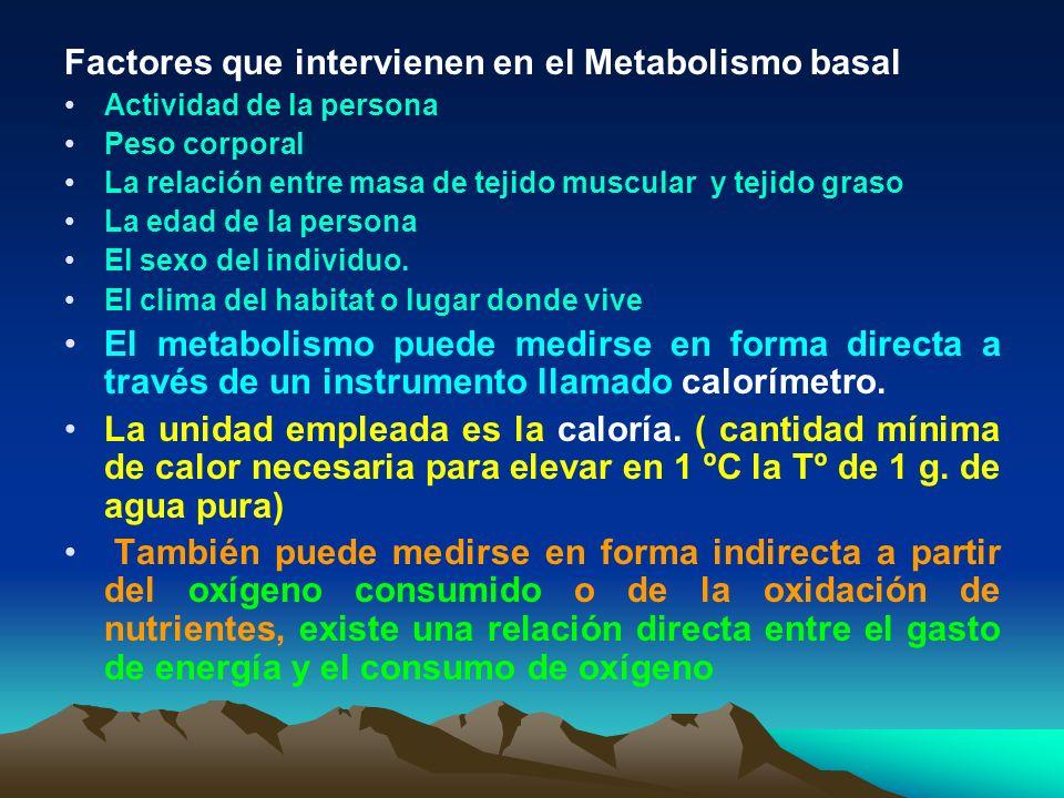 Factores que intervienen en el Metabolismo basal Actividad de la persona Peso corporal La relación entre masa de tejido muscular y tejido graso La eda