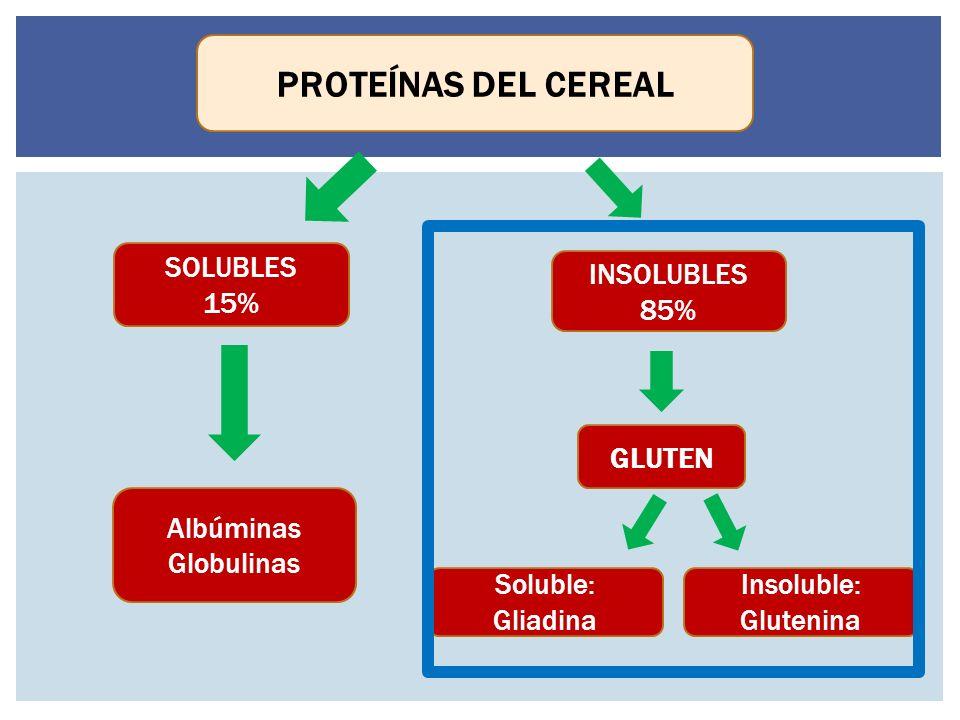SOLUBLES 15% INSOLUBLES 85% GLUTEN Albúminas Globulinas Insoluble: Glutenina Soluble: Gliadina PROTEÍNAS DEL CEREAL