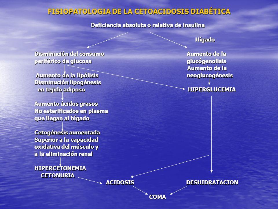 FISIOPATOLOGIA DE LA CETOACIDOSIS DIABÉTICA Deficiencia absoluta o relativa de insulina Hígado Hígado Disminución del consumo Aumento de la periférico de glucosa glucógenolisis Aumento de la Aumento de la Aumento de la lipólisis neoglucogénesis Aumento de la lipólisis neoglucogénesis Disminución lipogénesis en tejido adiposo HIPERGLUCEMIA en tejido adiposo HIPERGLUCEMIA Aumento ácidos grasos No esterificados en plasma que llegan al hígado Cetogénesis aumentada Superior a la capacidad oxidativa del músculo y a la eliminación renal HIPERCETONEMIA CETONURIA CETONURIA ACIDOSIS DESHIDRATACION ACIDOSIS DESHIDRATACION COMA COMA