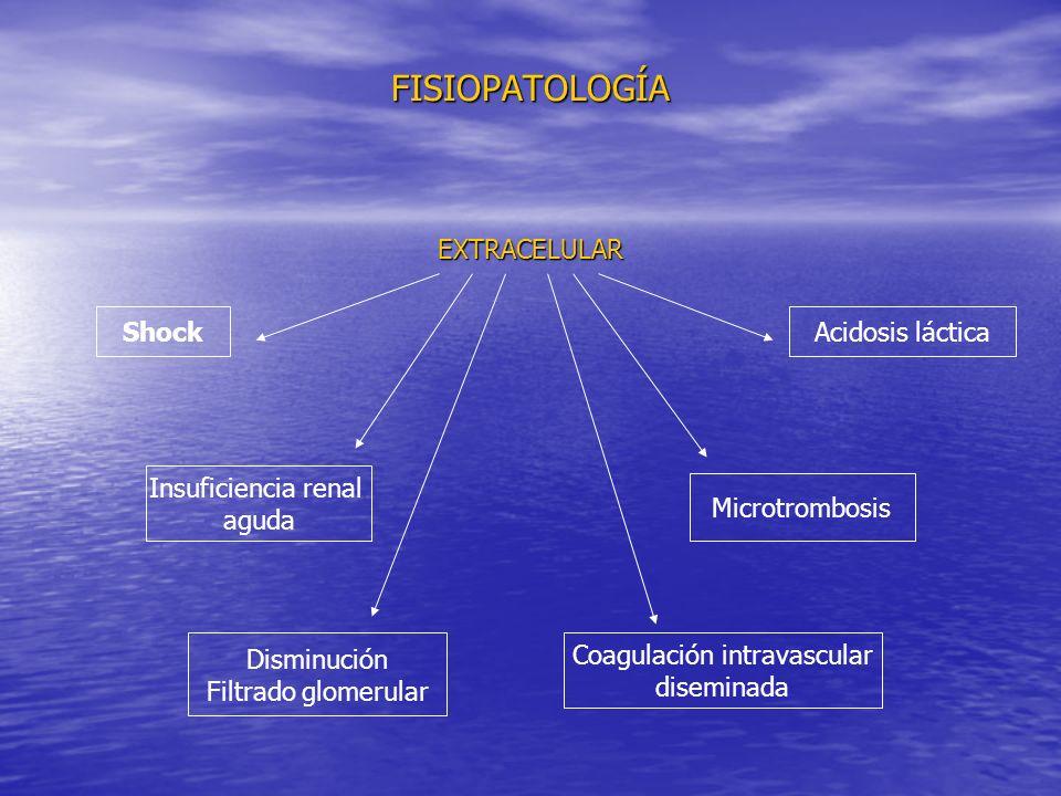 FISIOPATOLOGÍA EXTRACELULAR Shock Insuficiencia renal aguda Acidosis láctica Microtrombosis Coagulación intravascular diseminada Disminución Filtrado glomerular