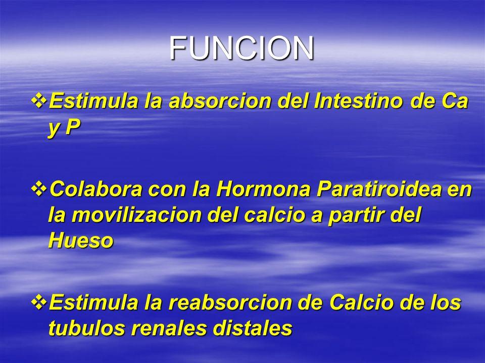 FUNCION Estimula la absorcion del Intestino de Ca y P Estimula la absorcion del Intestino de Ca y P Colabora con la Hormona Paratiroidea en la moviliz